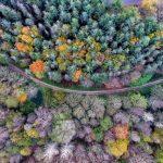 Ce cliché fait partie d'un triptyque. Trois prises de vue au même endroit, à différents moments de l'année. En automne, en hiver, et en été. Ici, nous avons l'automne. Il restera à faire le printemps. Des pins, des hêtres, des chênes, des frênes et autres feuillus remplissent la photo aérienne. Une route de forme courbe traverse la photographie aérienne de part en part. En fonction des saisons, ce lieu plein de charme niché au coeur du Morbihan, nous dévoile ses couleurs, qui varient au fil des saisons.