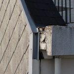 Nous avons été contacté par le syndic d'une copropriété pour inspecter les points faibles et difficilement accessibles de l'ouvrage datant des années 70. De nombreuses malfaçons ont ainsi pu être détectées, comme sur cette photo où des éléments de béton risque de tomber et mettent en péril la pérennité du balcon.