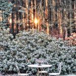 Un soleil d'hiver traverse les bois de pins et illumine cette scène poétique. Deux chaises en métal forgé ainsi qu'une table trônent dans ce décor blanc.