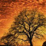 Un ciel de feu pour ce magnifique coucher de soleil sur la commune de Plouay dans le Morbihan. Devant ce spectacle un arbre encore dépourvu de feuilles tranche dans ce ciel orange et jaune.